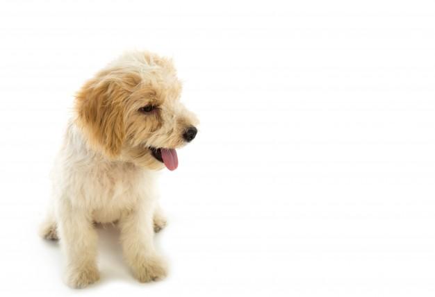 Nos animaux mairie de grenade - Loi sur nuisances sonore par aboiement de chiens ...